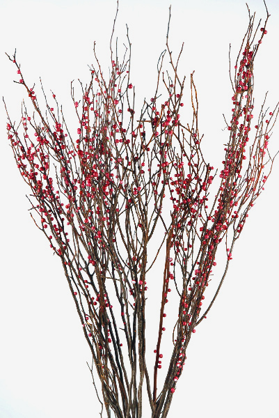Sweet Huck Natural Huckleberry Branches Red Berries (36 branches) 26 -28in