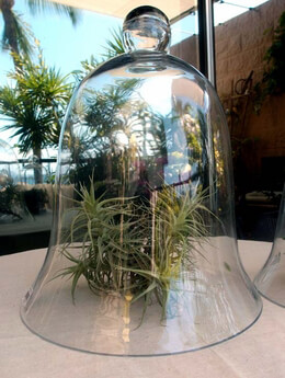 Glass Cloche 16in