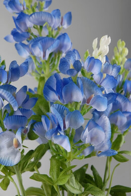 Texas Bluebonnets with 5 stems