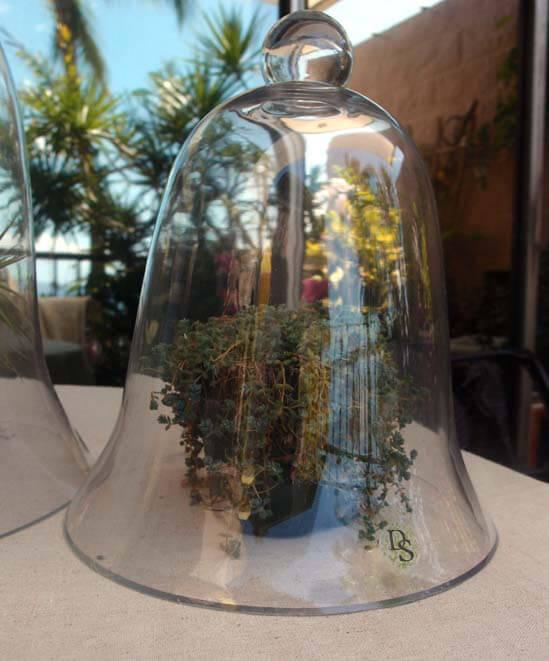 "Glass Bell Jar Thick Glass 11-1/2"""