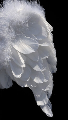 "Tiny Angel Wings 13"" x 17"" Infant White Marabou Trimmed Wings"