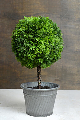 Faux Cedar Ball Topiary  19in