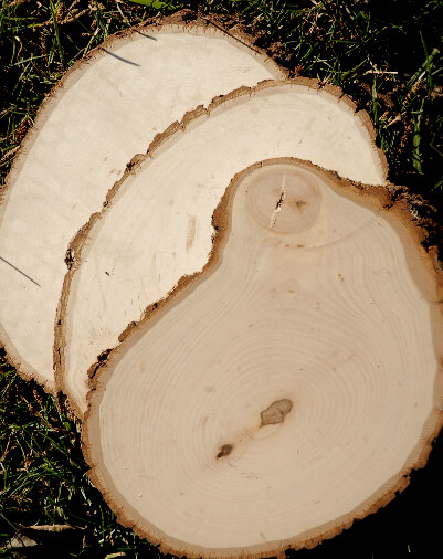 Irregular Tree Slices with Bark 11in