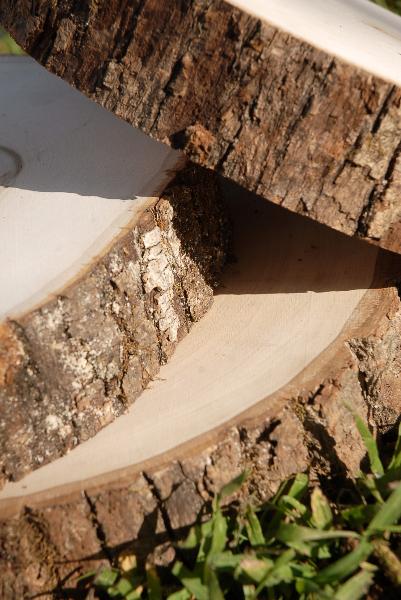 "Tree Slices Wood  Round 7-9"" with Bark Edges"