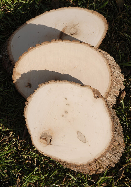 Tree Slice Thick Cut Wood Slabs 9-13in