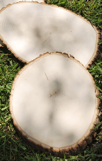 Extra Large Tree Slices 11-18 in