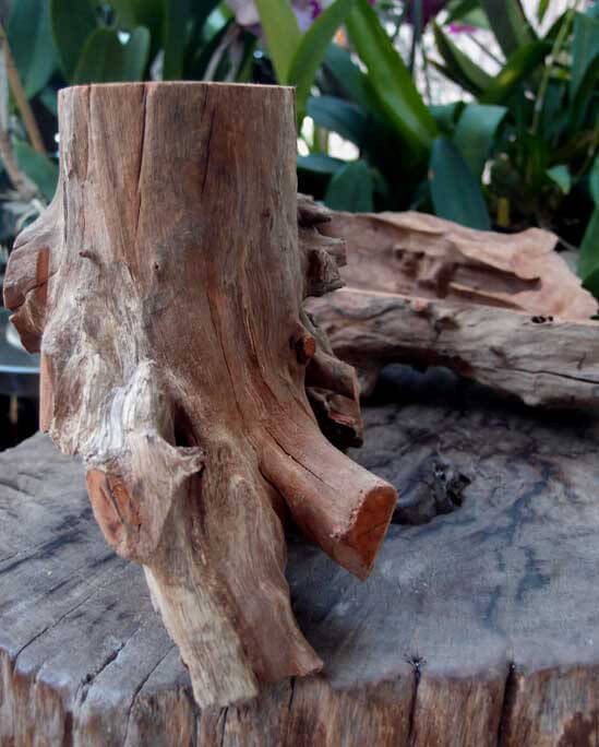 Tree Stumps Reclaimed Wood 6 to 9 in. Tree Stump