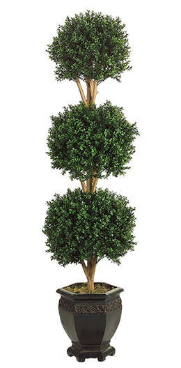 Tri Ball Boxwood Topiary in Pot 5ft