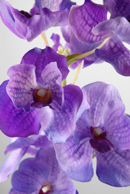 Silk Orchids Purple 31in