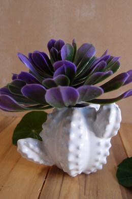 Ceramic Cactus Bud Vase 3.5 inch