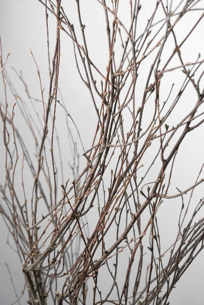 Natural Birch Branches 50in 7 branches
