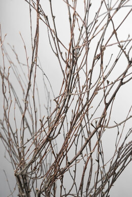 Victorian Birch Branches 50in 7 branches