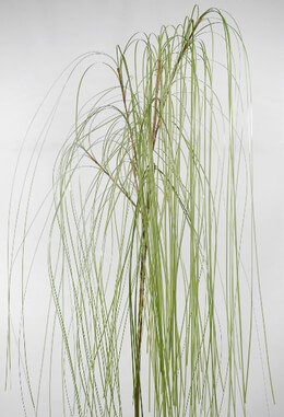 "Weeping Willow Branches Artificial 36"" tall"