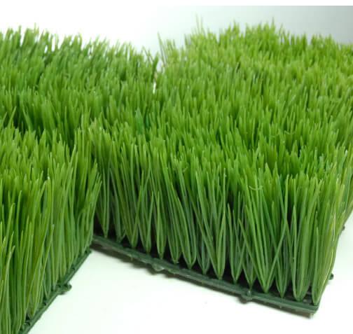 Wheat Grass Mats 6x6