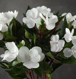 Silk Impatiens White