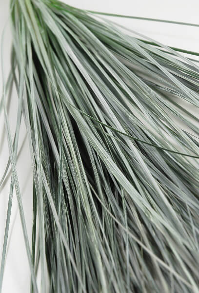 "Preserved PASTEL WHITE Natural Bear Grass 31"""