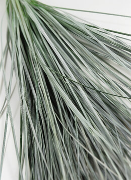 Preserved Tall Grass White