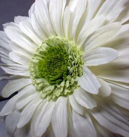 Silk Gerbera Daisy White