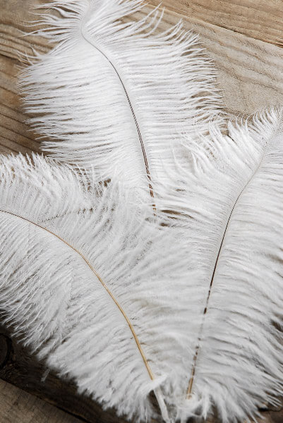 3 White Ostrich Feathers on Wire Stem