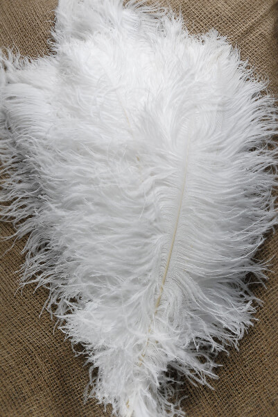 Ostrich Feather Wing Plumes 22-28in (1/2 lb)