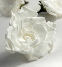 White Preserved Gardenias 3in (4 flowers)