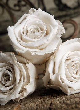 6 White 2.5in Preserved Roses