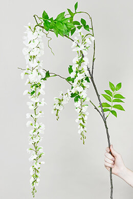 White Wisteria Flowering Branch 69""
