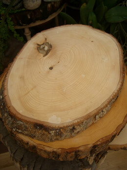Irregular tree slices with bark 12 16in oval for Wood trunk slices