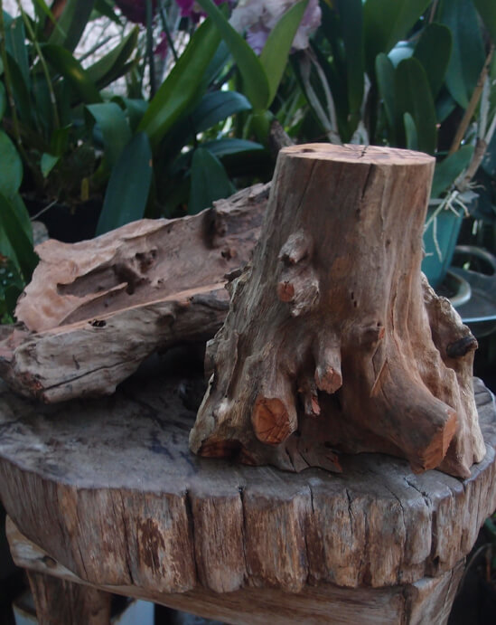 Wood Tree Stumps 10-12 inch