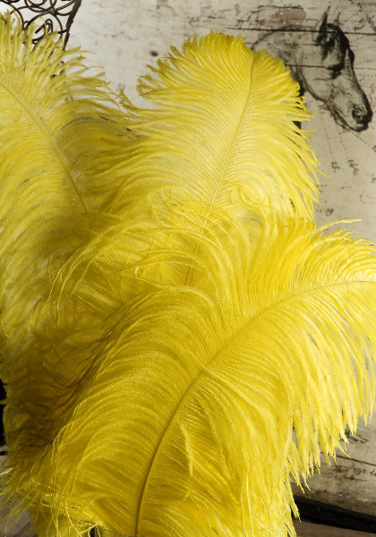 Ostrich Feathers Yellow 24in | .5 lbs