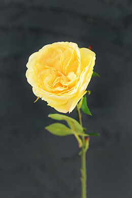 Yellow Rose 20.5in