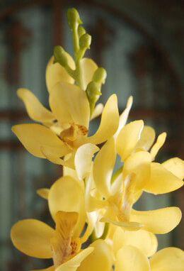 Silk Orchids Yellow 31in