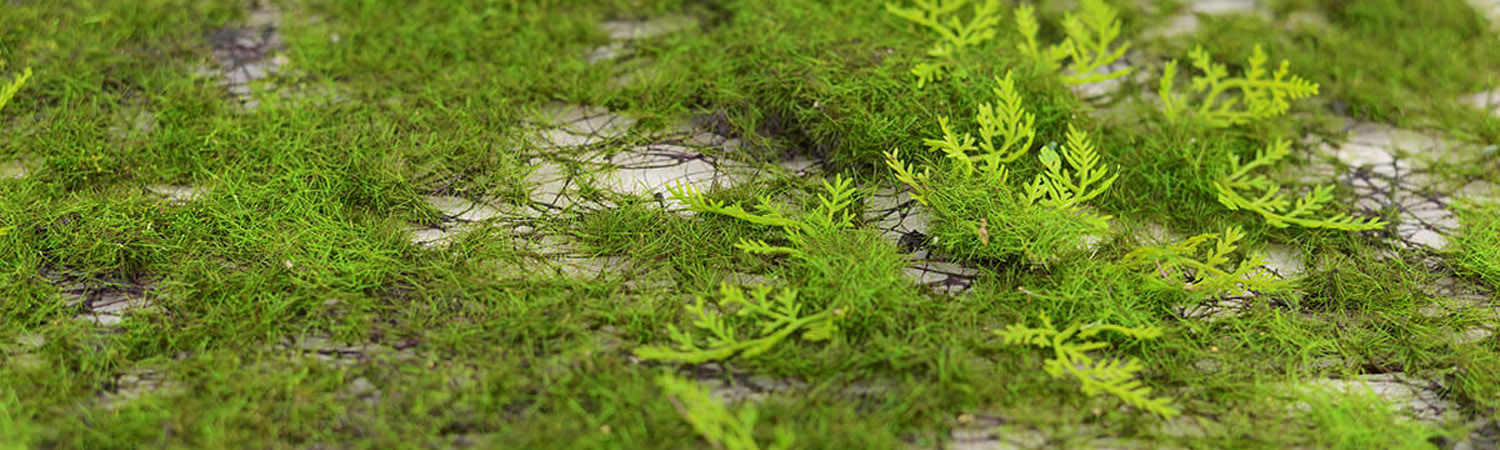Moss Decorations