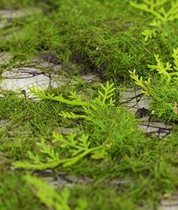 Moss Decorations