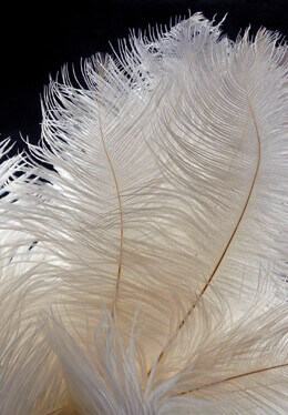 120 Ostrich Feathers 1/2lb - Ostrich Drabs - White 14-18in
