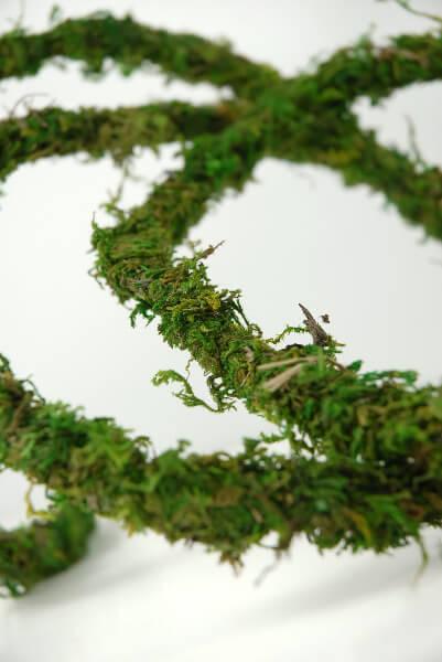 Moss Vine Preserved 12ft