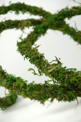 Moss Vine Preserved 12ft