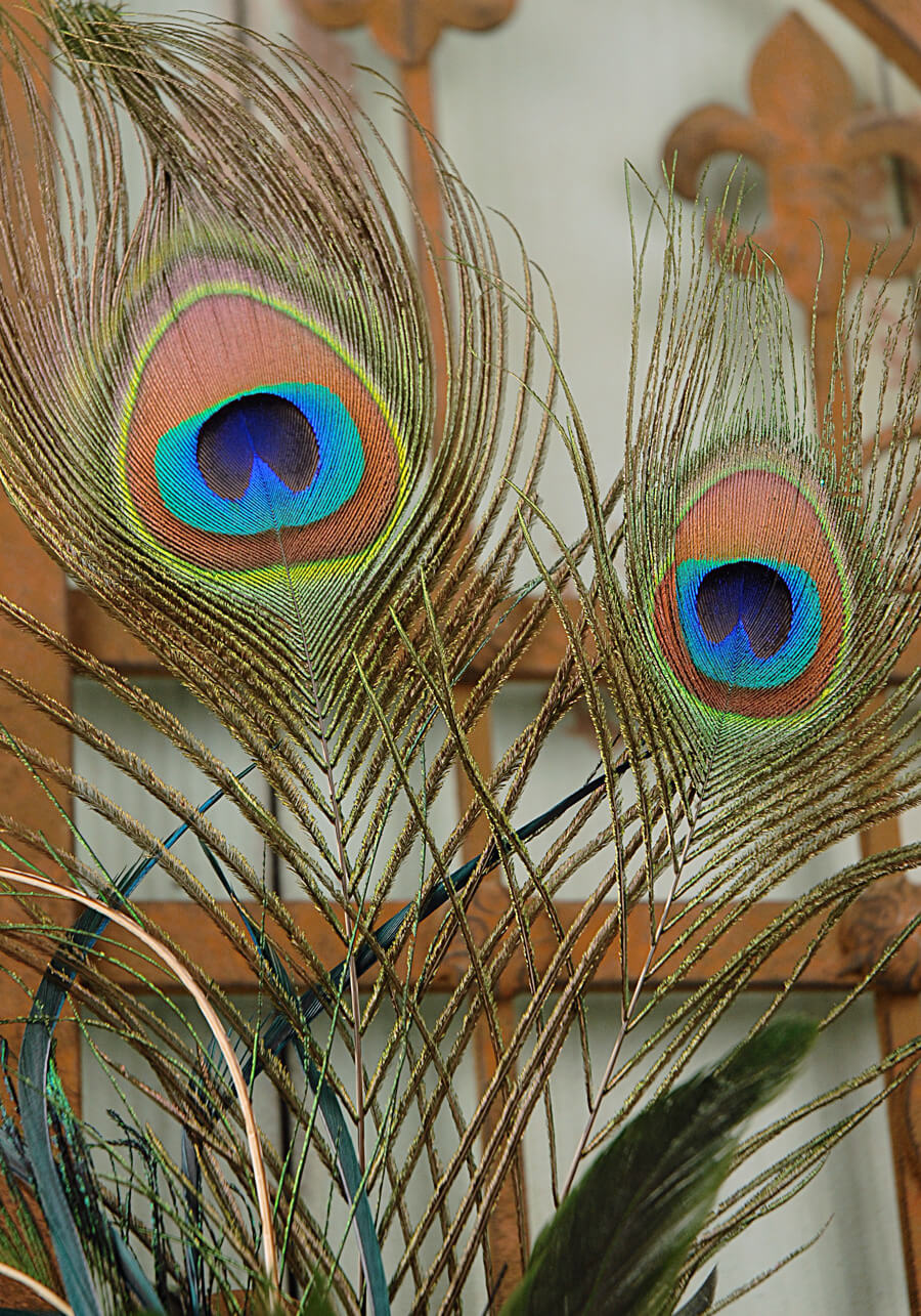 Peacock feathers wired in