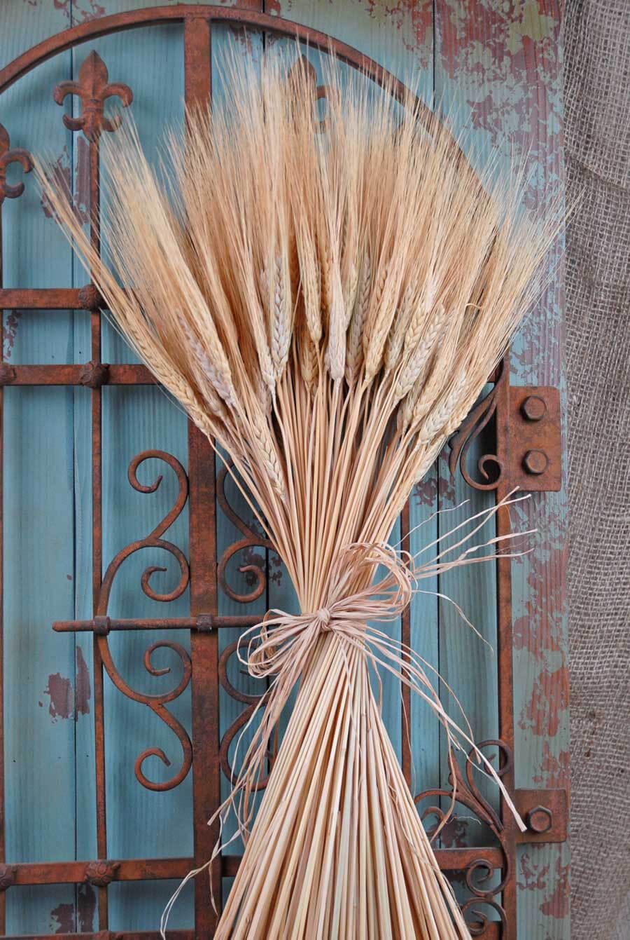 Triticum Wheat Natural 1 Lb Blond