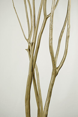 "Platinum Gold Mitsumata Branches (3 branches) 45-50"""