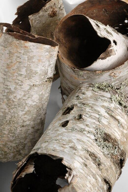 Natural Birch Bark Tubes 15in