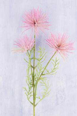 Pink Anemone Flowers 26in