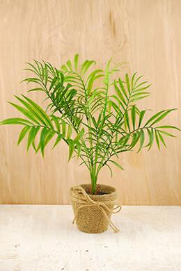 Areca Palm Artificial 15in