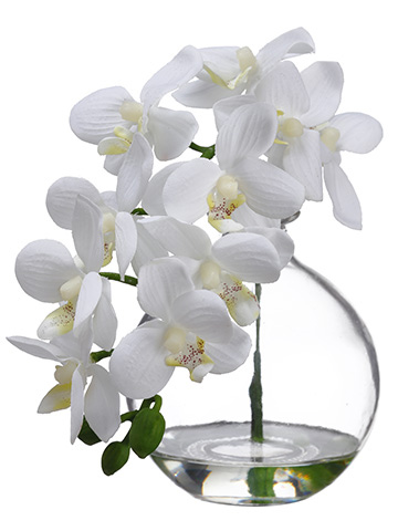 10 Quot Phalaenopsis Orchid In Glass Vase Cream