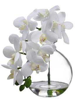 "10"" Phalaenopsis Orchid in Glass Vase Cream"
