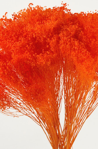Orange Baby S Breath Bundle 18 Quot