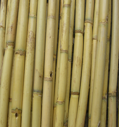 Bamboo poles 12 pack 24in natural for Where to buy bamboo sticks for crafts