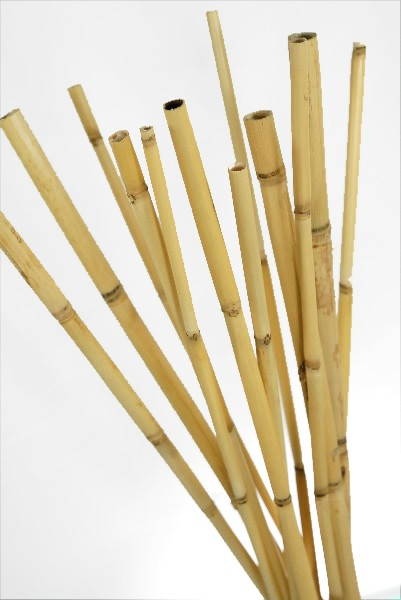 watercane bamboo poles 20 in pack of 12