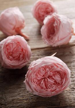 Preserved Temari Roses Bridal Pink (8 roses) 2.25in