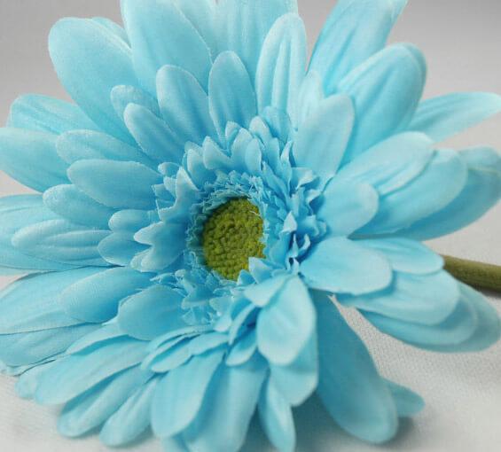 """12 Gerbera Daisies Aqua Turquoise 21"""""""